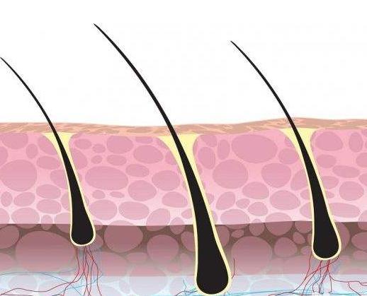 毛囊和毛囊单位之间是什么关系
