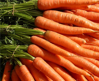 胡萝卜椰子护发素能防止脱发吗